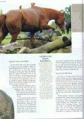 Abenteuer Extreme Trail. Quarter Horse Journal 6-2015 - Seite 6