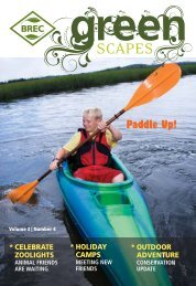 Paddle Up! - Brec