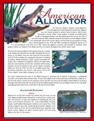 gator fact sheet - Savannah River Ecology Laboratory