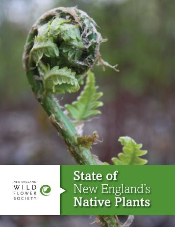 State of New England's Native Plants