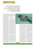 Vaquita marina - Page 4
