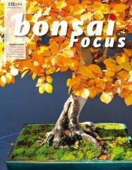 BONSAI FOCUS 2014-6 EN PREVIEW
