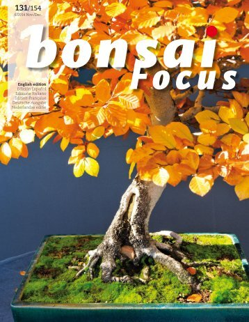 BONSAI FOCUS 2014-6 EN PREVIEW