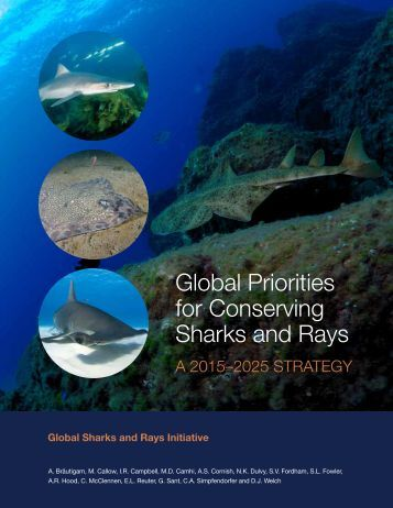 Global Priorities for Conserving Sharks and Rays