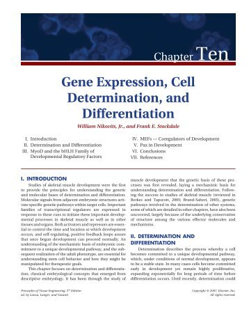 Gene Expression, Cell Determination, and Differentiation