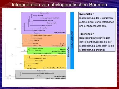 Molekulare Phylogenie und freie Software