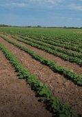 Impacto económico macro y micro de malezas resistentes en el agro argentino - Page 4