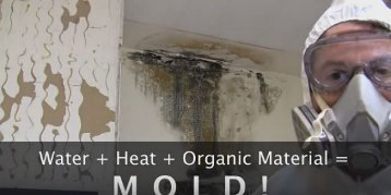Removing Mold From Your Fort Lauderdale Home Or Business