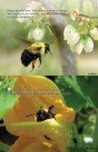 Pollinators - Page 4