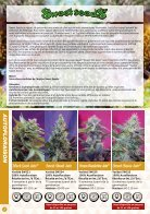 Sweet Seeds 2016 - French - Page 2