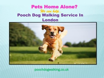 Pooch Dog Walking in London