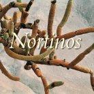Sabores Nortinos - Page 2
