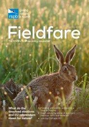 Fieldfare