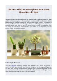 The most effective Houseplants for Various Quantities of Light