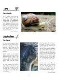 Schulzeitung 12-2009neu - Guttannen - Kibs.ch - Seite 6