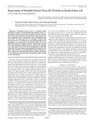 Expression of Semliki Forest Virus E1 Protein in Escherichia coli