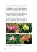 Plantas medicinais patas-de-vaca - Page 7