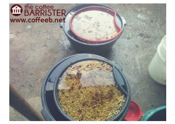 Washing Coffee - The Coffee Barrister