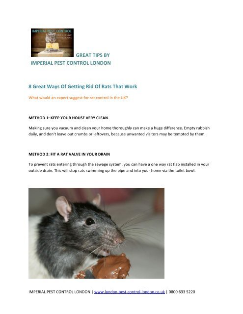 8 Great Ways Of Getting Rid Of Rats That Work