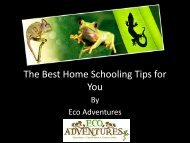 The Best Home Schooling Tips for You