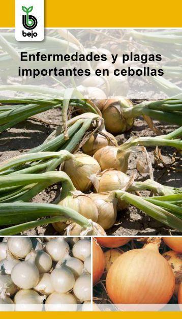 20130126104951-bejo-enfermedades-y-plagas-cebollas