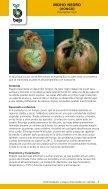 20130126104951-bejo-enfermedades-y-plagas-cebollas - Page 5