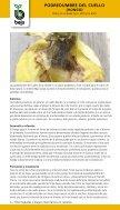 20130126104951-bejo-enfermedades-y-plagas-cebollas - Page 6