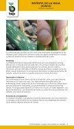 20130126104951-bejo-enfermedades-y-plagas-cebollas - Page 7
