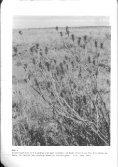 Walter und Breckle - 1999 - Vegetation und Klimazonen  Grundriß der globalen  - Seite 5