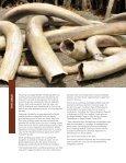 Wildlife - Page 3