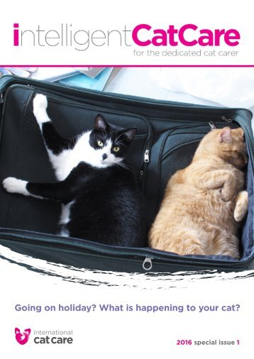 Going on holiday? What is happening to your cat?