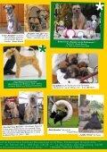 "Border Terrier ""Rasputin v.d. Border Meute"" - Seite 7"