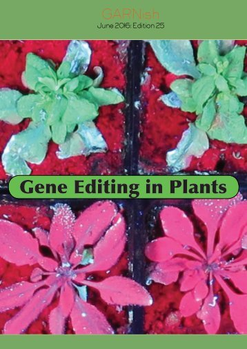 Gene Editing in Plants