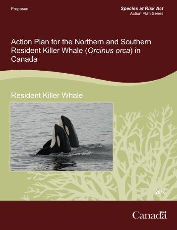 Resident Killer Whale