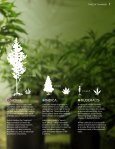 Premium handpicked cannabis seeds - Page 7