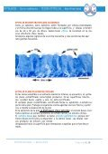 APUNTES EPITELIAL TEJIDO - Page 6