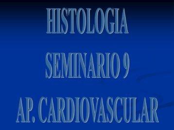 Estructura General de los vasos (incluido el corazón)