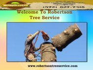 Tree Trimming Services in Plano |Robertson Tree Service