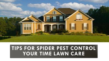 Tips for Spider Pest Control Your Time Lawn Care