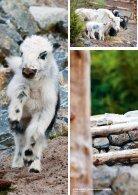 Zoo Zürich Jahresbericht 2015 - Page 4