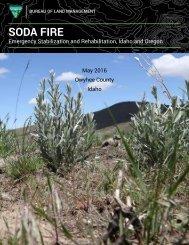 SODA FIRE