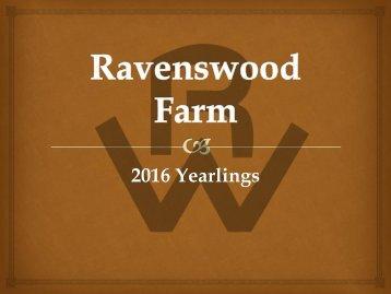 Ravenswood 2016 yearlings