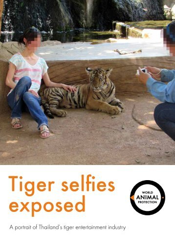 Tiger selfies exposed
