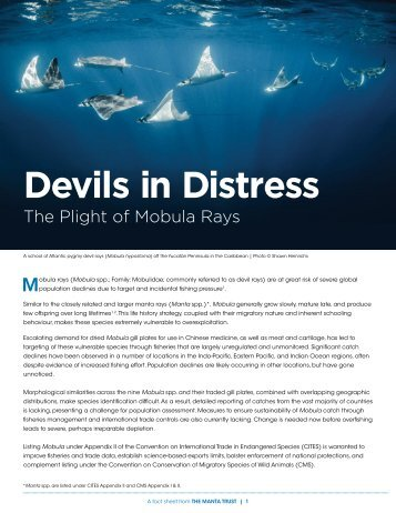 Devils in Distress