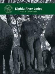 Diphlu River Lodge Brochure
