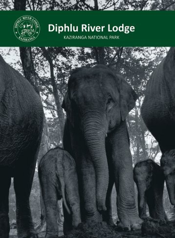 Diphlu River Lodge Brochure