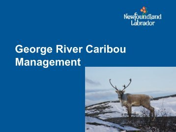Population Cycles Relative Abundance of George River Caribou ...