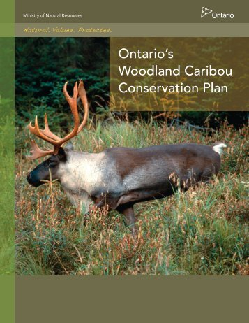 Ontario's Woodland Caribou Conservation Plan - Ministry of Natural ...