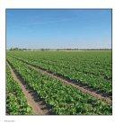 lettuce brochure 2015 - Page 4