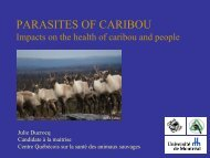 Parasites of caribou: impact on the health of caribou and people